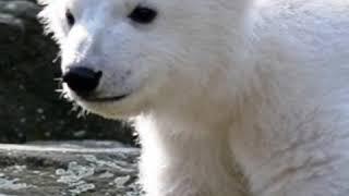 Природные животные и домашние животные 😃😃😃