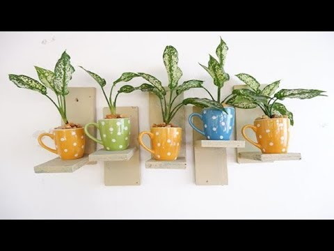 Aglaonema Snow White in Polka Dots Cups as DIY Mini Wooden Wall Hanging Decor