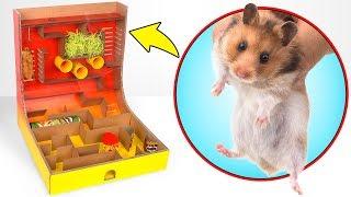 So baust du ein King-Of-The-Hill Labyrinth für deinen Hamster 🐹👑
