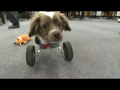 Students make doggy wheelchair