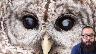 7 pássaros mais PERIGOSOS que existem no mundo