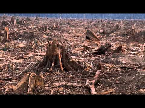 Extinction & The Loss of Biodiversity