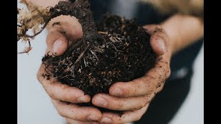 The Benefits of Humic Substances in Agriculture