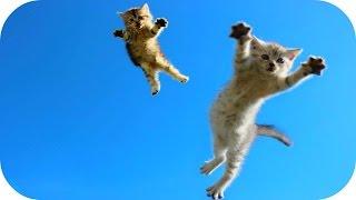 Смешное Видео с Кошками! Забавные Кошки! Funny Cats Video Compilation /