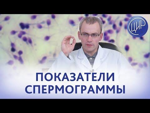 Основные ПОКАЗАТЕЛИ СПЕРМОГРАММЫ. Концентрация, подвижность и морфология сперматозоидов.