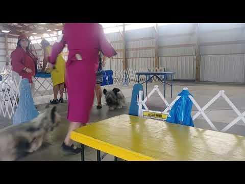 6.24.18 Cambridge MN KC Skye Terrier