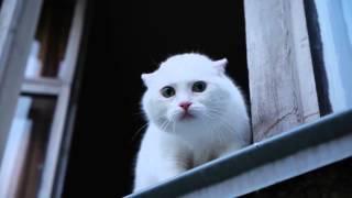 Белый кот -серьезный защитник квартиры