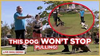 How To Stop Dog Pulling! (Dog Nation Tips) w/ Cesar Millan!