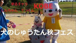 北神戸田園スポーツ公園 で開催された犬のじゅうたん秋フェスタに行った...