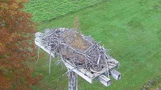 Preview of stream Osprey Cam by Nova Scotia Webcams
