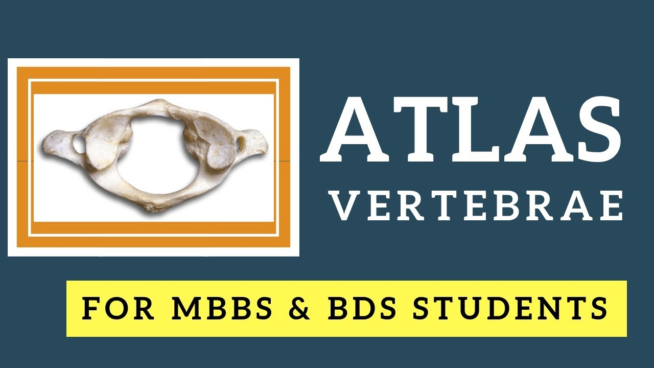 Anatomy Of Atlas Vertebra I First Cervical Vertebra I Vertebral