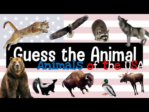 Guess the Animal | 20 Animal Sounds from the USA