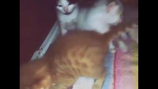 Котята 3 недели🐱