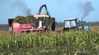 Уборка кукурузы на силос ПОЛЕСЬЕ 600.