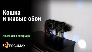 Cat and Projection   Кот и проекция