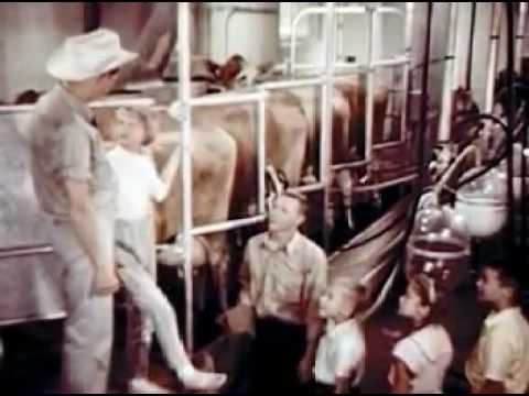 Uncle Jim's Dairy Farm (1963)