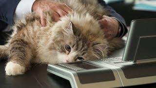 НЕ ДЕТСКИЕ ПРИКОЛЫ Смешные дети Домашние животные - Смешно до слез (2019) МатроскинТВ