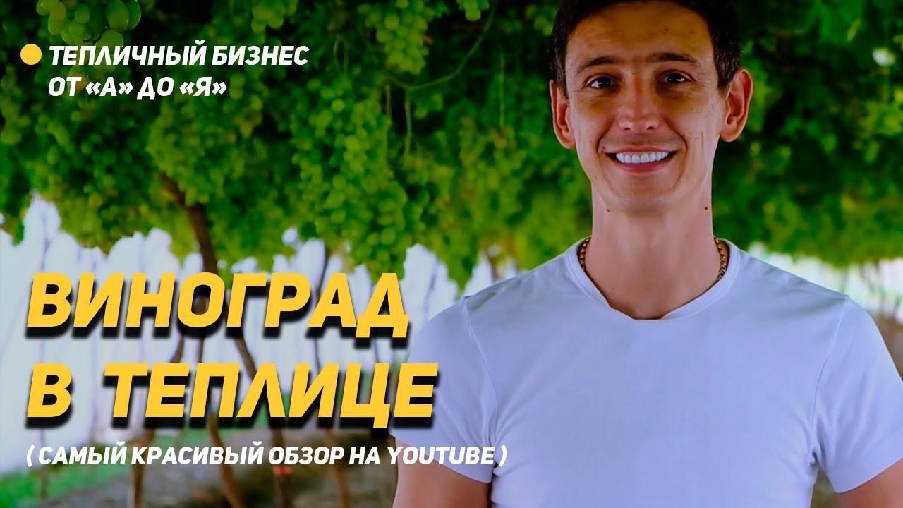 Виноград + клубника в теплице. Лучший обзор на YouTube