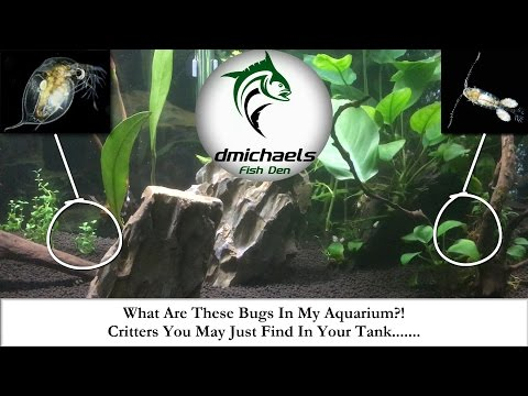 What Are These Bugs In My Aquarium?! Critters You May Just Find In Your Tank....