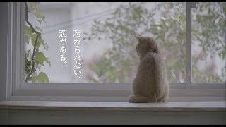 「REQUEST -30th Anniversary Edition- Trailer  (猫の恋)」