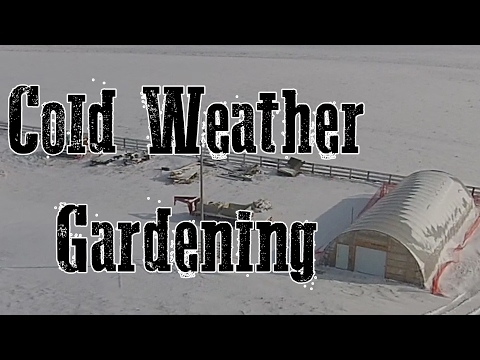 Cold Weather Gardening in the High Tunnel