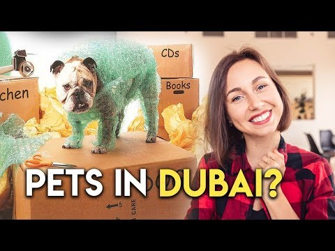 Moving to Dubai with Pets. Movers and Packers.
