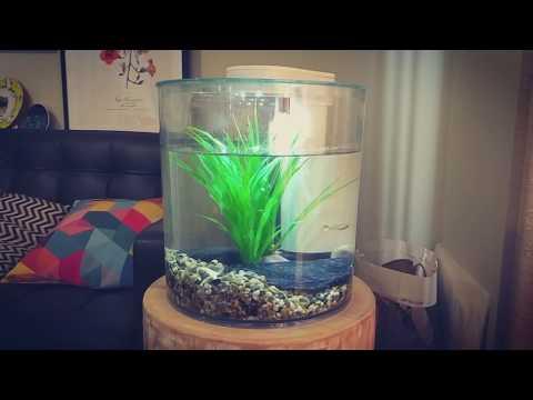 Best 360°Cylinder Desktop Fish Tank: Marina 360° Aquarium Starter Kit