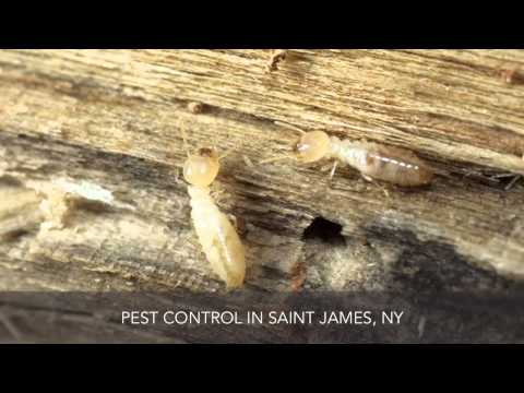 Emergency Environmental Control Inc Pest Control Saint James NY