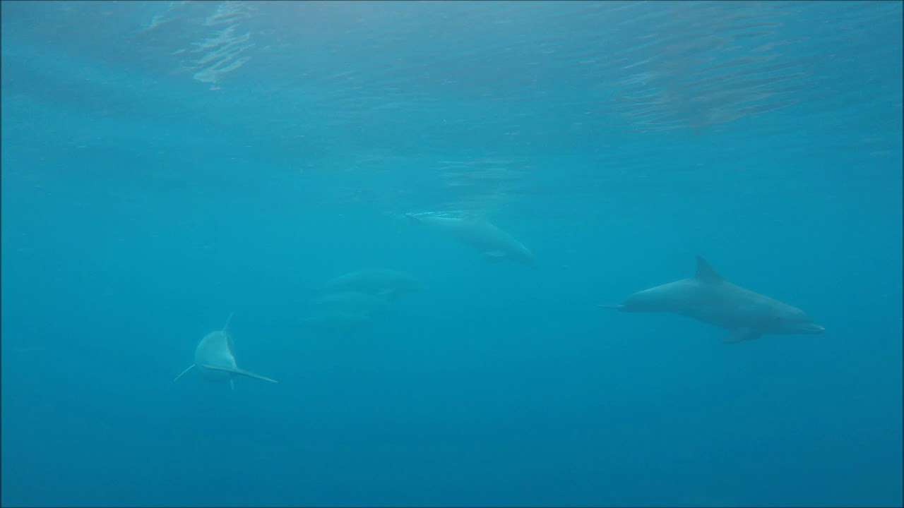 video Dolphin Watch