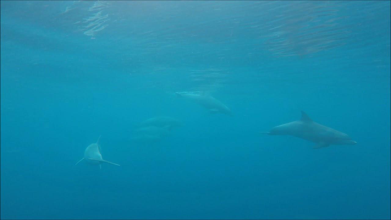 video Swim with Wild Dolphins (Peak Season)