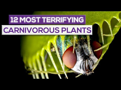 12 Most Terrifying Carnivorous Plants In The World