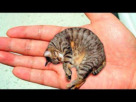 5 самых маленьких животных в мире