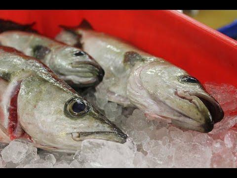 Seafish: Responsible Fishing Scheme - Quayside To Customer