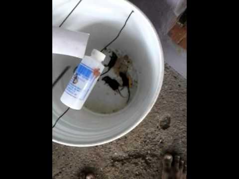 Trampa para rata en cubeta youtube - Trampas para cazar ratas ...