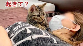 ゲーム中に寝落ちした飼い主を一生懸命起こそうと頑張るイケメン子猫w