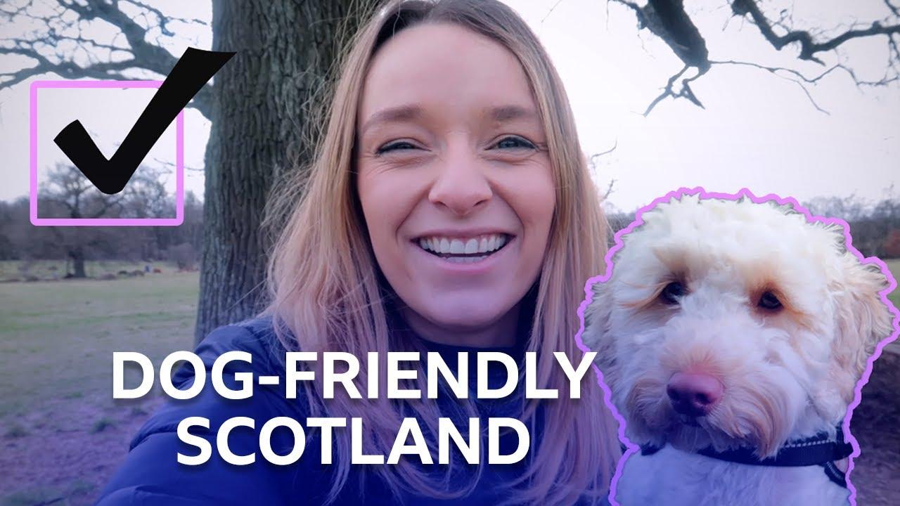 Cammo Estate   Dog Friendly Scotland   BBC The Social