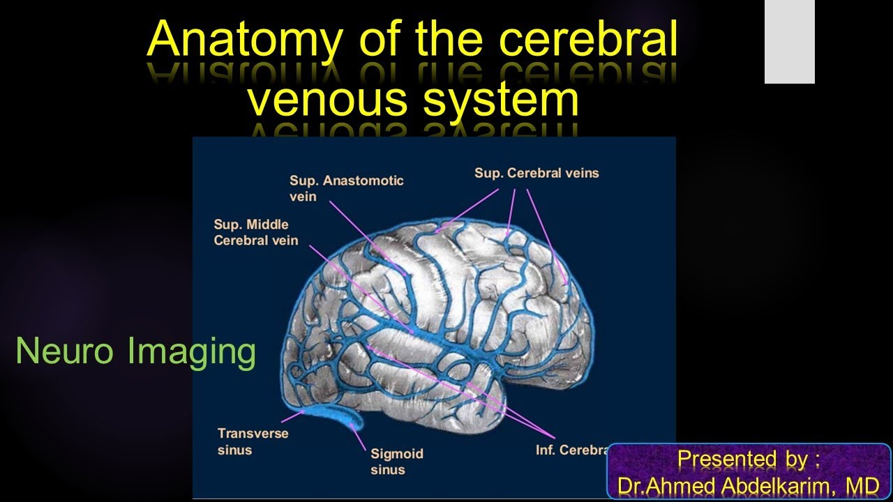 Famous Cerebral Venous Anatomy Photos - Anatomy and Physiology ...