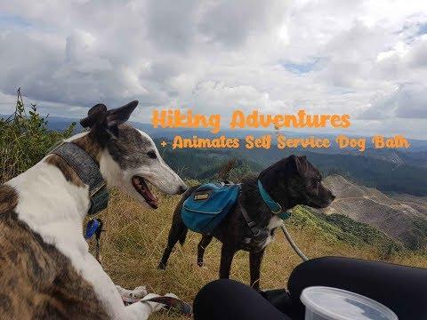 Dog Hiking Adventures + Animates Dog Wash