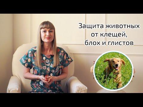 Глисты у кошек и котов: симптомы, лечение, профилактика