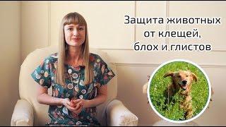 Лечение кошек и собак от клещей, блох и глистов.
