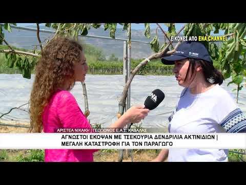 Άγνωστοι έκοψαν με τσεκούρια δενδρύλλια ακτινιδίων στο Ερατεινό του Δήμου Νέστου
