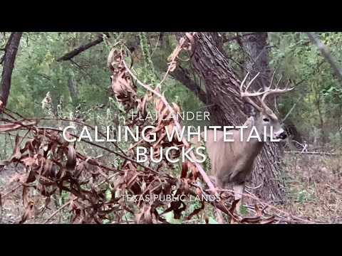 Hunting Public, Texas Whitetail From The Ground