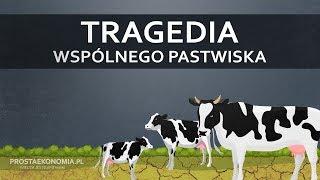 Tragedia wspólnego pastwiska