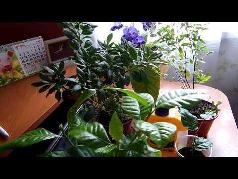 #Витамины для комнатных растений/цветов. Делюсь секретами. Удобрения, подкормка
