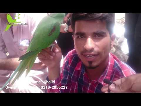 Repeat Birds Market Lalukhait Video Latest Update 21-4-19 in