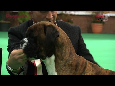 Birmingham National Dog Show 2016 - Working group Shortlist