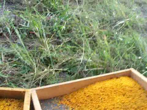 BEE POLLEN TRAPS,GA Pollen Trap Beehives,Propolis Honey bees hive,Beekeepers Beekeeping John Pluta