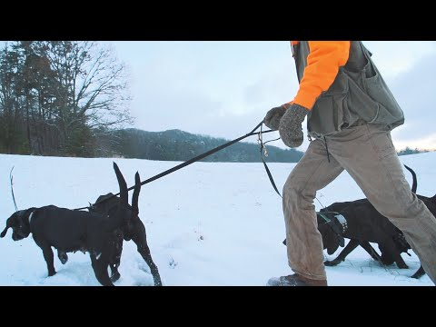 Winning | Bear Hunting With Hounds In The Appalachian Mountains