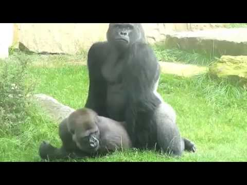 Monkey sex with girl must watch from YouTube · Duration:  58 seconds