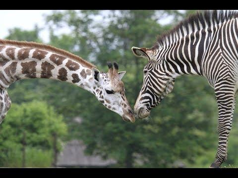 Safari Park Dvůr Králové: Jedeme do Afriky!